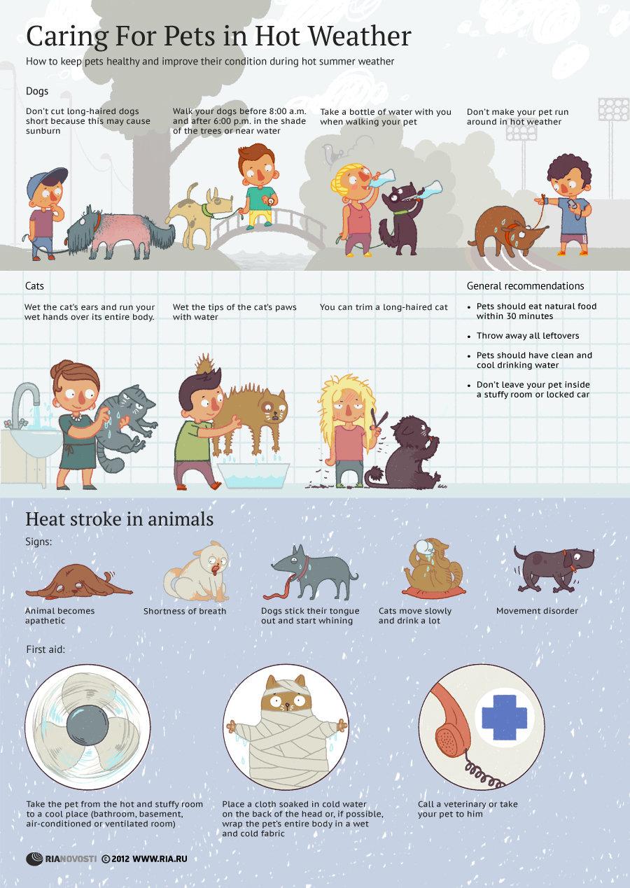 Caring For Pets in Hot Weather - Sputnik International