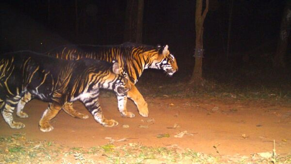 Tigers - Sputnik International