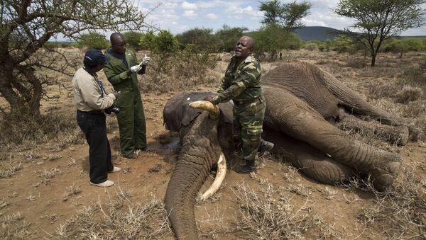 'Novel Disease' May be Behind Hundreds of Elephant Deaths in Botswana - Sputnik International