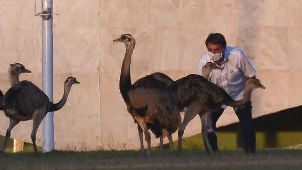 Brazilian President Jair Bolsonaro feeds emus outside the Alvorada Palace in Brasilia, Brazil, on July 13, 2020, in the midst of the new COVID-19 coronavirus pandemic - Sputnik International