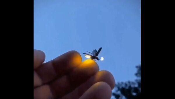 Little Firefly - Sputnik International