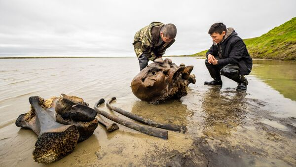In this handout photo released by the press-office of Yamalo-Nenets Autonomous Area Governor, local residents looks at the remains of a petrified mammoth skeleton, which were found on the shore of lake Pechevalavato, outside the settlement of Seyakha, Yamalsky District, Yamalo-Nenets Autonomous Area, Russia - Sputnik International