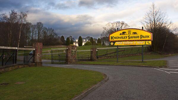 The entrance to Knowsley Safari Park - Sputnik International