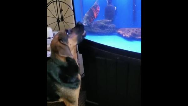 Dog VS fish - Sputnik International