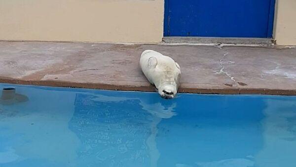 Our seals are stupid and I love them - Sputnik International