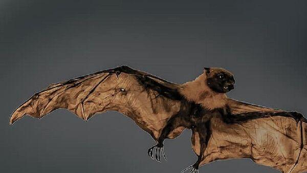 Giant bat - Sputnik International