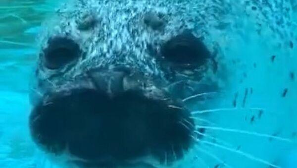 Seal  - Sputnik International
