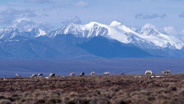 Caribou graze on the coastal plain of the Arctic National Wildlife Refuge, with the Brooks Range as a backdrop.  - Sputnik International