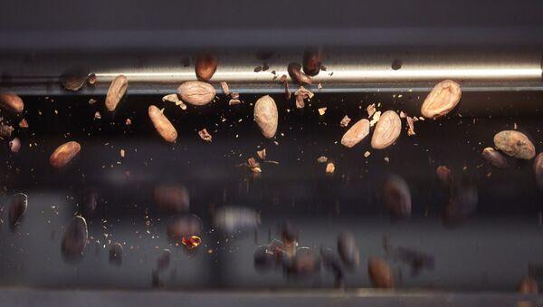 Kakaobohnen bei der Verarbeitung im Kakaomassezentrum in Olten. (PPR/Lindt & Sprüngli/Maurice Haas) - Sputnik International