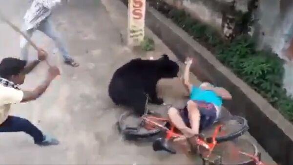 Bear attacks a man in bhawanipatna town today morning - Sputnik International