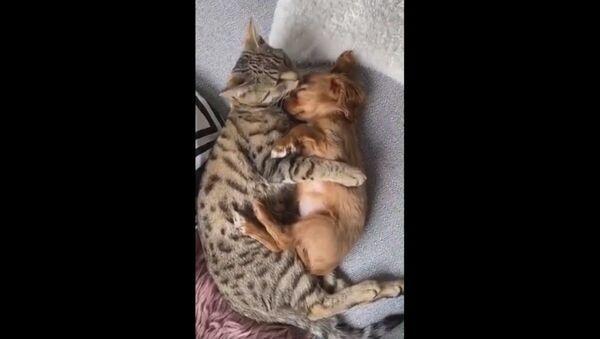 If you give a cat a puppy - Sputnik International