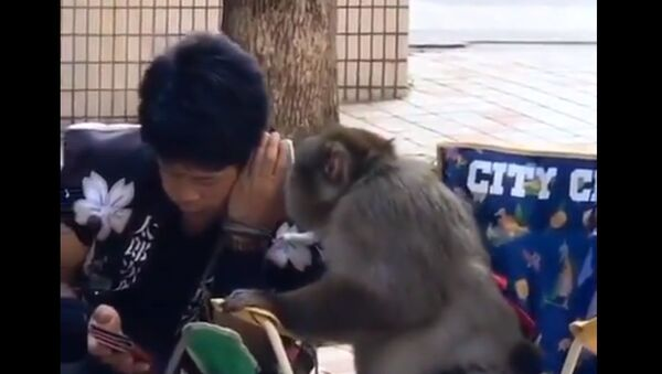 A new human-monkey friendship video on Twitter is possibly going to be among your favourite human-like behaviour of these mammals - Sputnik International