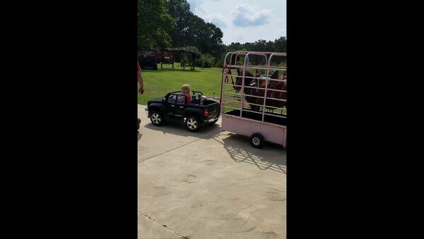 US Toddler Tows Mini Horse With Electric Car - Sputnik International
