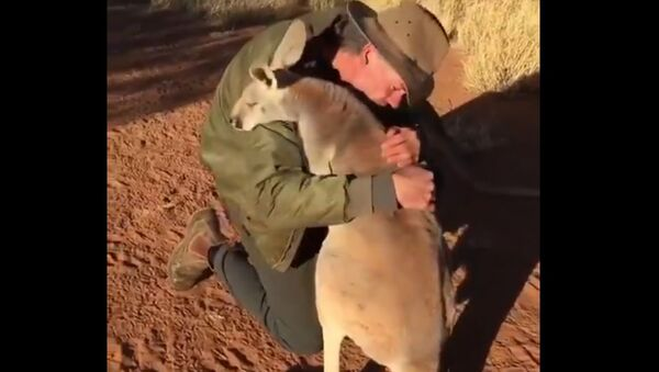 Sunday Energy: Dewey-Eyed Kangaroo Reminds us 'Love is Simple' and it Comes With Hugs - Sputnik International