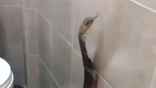 Snake in a toilet - Sputnik International