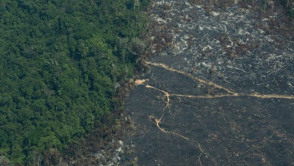 A burned area of Amazon rainforest is seen in the Biological Reserve Serra do Cachimbo, at the border with the Menkragnoti indigenous reserve of the Kayapo indigenous group in Altamira, Para state, Brazil, Wednesday, Aug. 28, 2019.  (AP Photo/Leo Correa) - Sputnik International