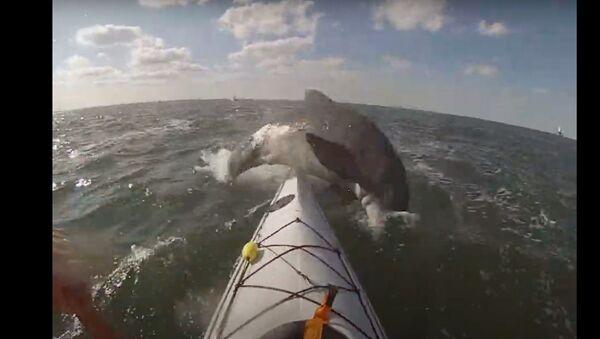 US Kayaker Gets Smacked by Dolphin - Sputnik International