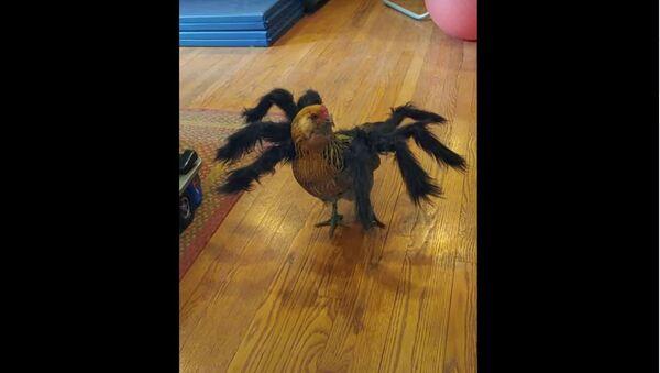 Halloween Ready Chicken Will Haunt You in Dreams If Seen at Night - Sputnik International