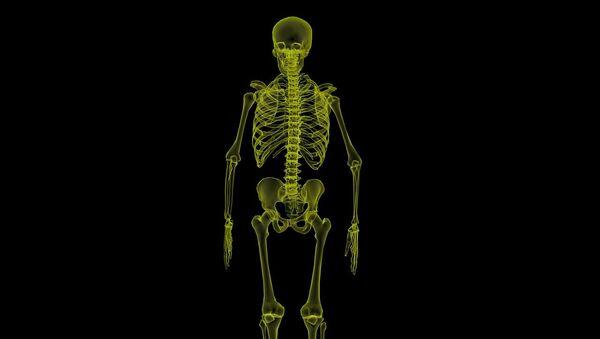 Human Skeleton - Sputnik International