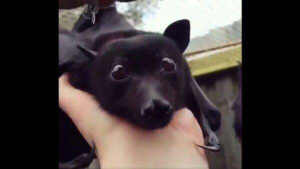This bat looks like a winged puppy - Sputnik International