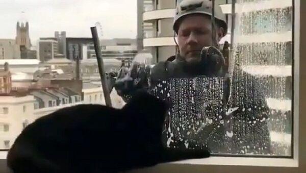 Cat - Sputnik International