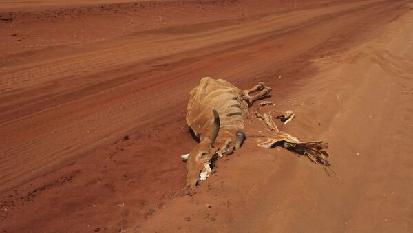 The carcase of a cow lies on an empty road near Lagbogal, 56 kilometers from Wajir town, Kenya, Wednesday, July 6, 2011 - Sputnik International
