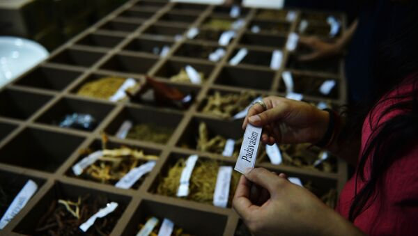 In this photograph taken on November 6, 2014, An Indian visitor reads the name of a herb from a display during the sixth World Ayurveda Congress and Arogya Expo in New Delhi. - Sputnik International