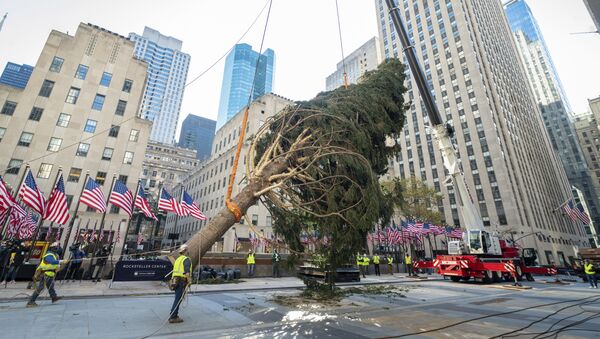 The 2020 Rockefeller Center Christmas tree, a 75-foot tall, 11-ton Norway Spruce from Oneonta, N.Y., is craned into place, Saturday, Nov. 14, 2020, in New York. The tree is presented to New York and the world by Tishman Speyer, the owners of Rockefeller Center.  - Sputnik International