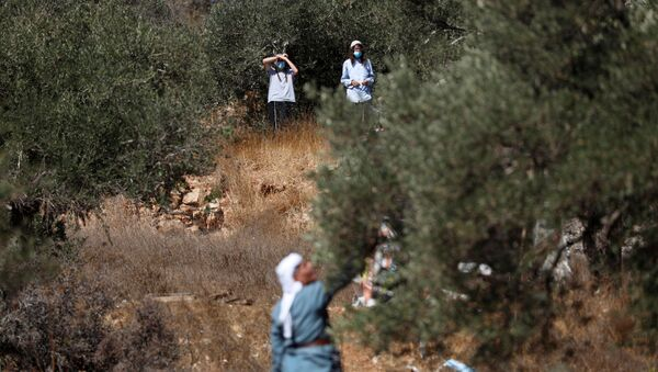 Israeli settlers watch as a Palestinian man as he picks up olives near a Jewish settlement outpost near Ramallah in the Israeli-occupied West Bank October 16, 2020. Picture taken October 16, 2020. REUTERS/Mohamad Torokman - Sputnik International