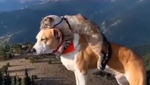 Doggo.cato.videos - Sputnik International
