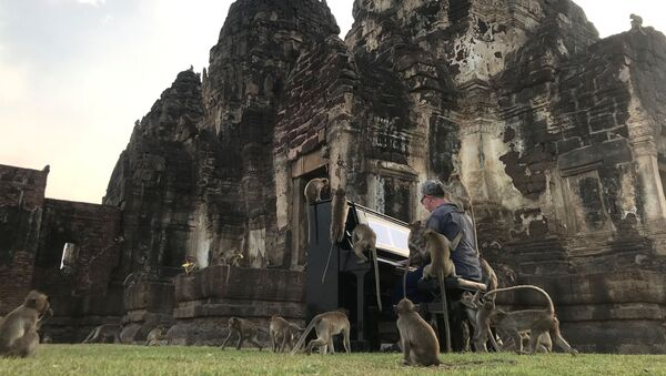 British musician Paul Barton plays the piano for monkeys that occupy abandoned historical areas in Lopburi, Thailand November 21 2020. Picture taken November 21, 2020. - Sputnik International