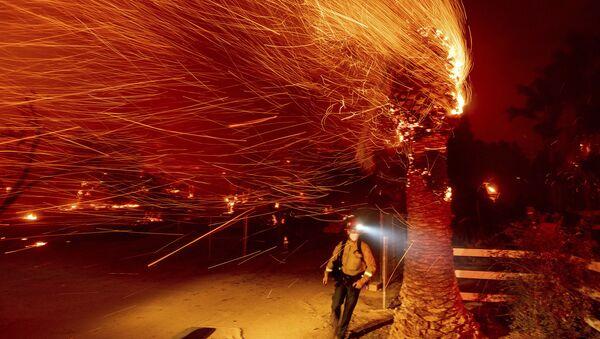 Пожарный проходит мимо горящего дерева во время тушения пожара в общине Сильверадо в Калифорнии - Sputnik International