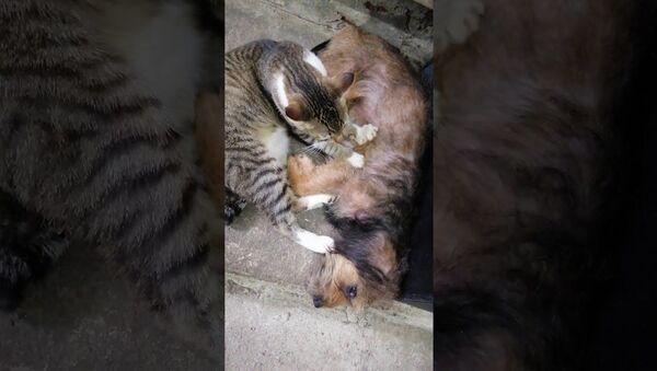 Mama Dog Enjoys Friendly Massage From Rescue Cat Best Friend || ViralHog - Sputnik International