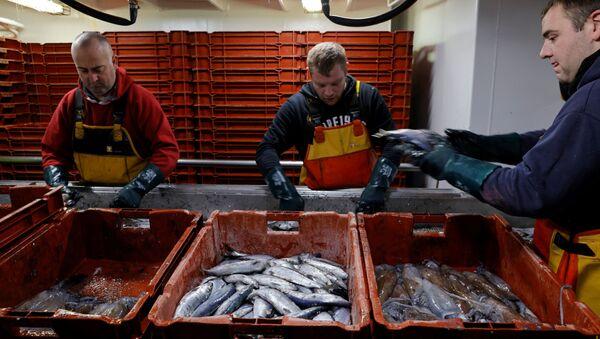 Fishermen sort fishes aboard the Boulogne-sur-Mer based trawler Nicolas Jeremy in the North Sea, off the coast of northern France, December 7, 2020.  - Sputnik International