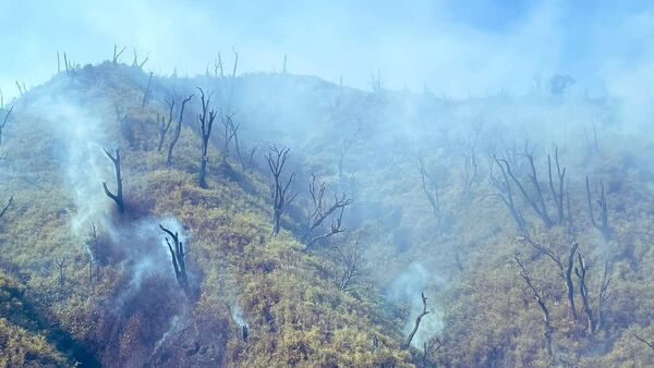 Massive fire in Dzukou Valley on the Manipur-Nagaland border. - Sputnik International