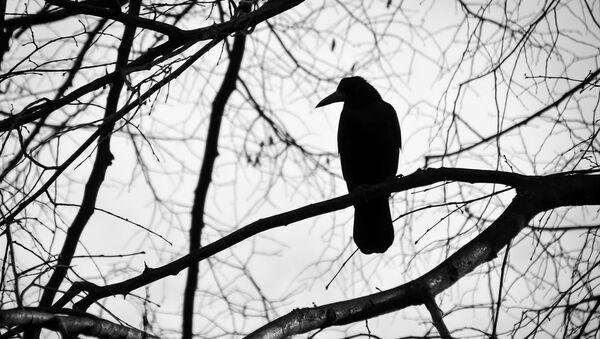 A crow - Sputnik International