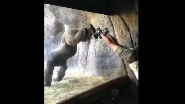 Gorilla - Sputnik International