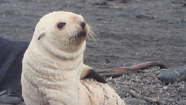 Seal Puppy Deals With Its Itch in Style - Sputnik International