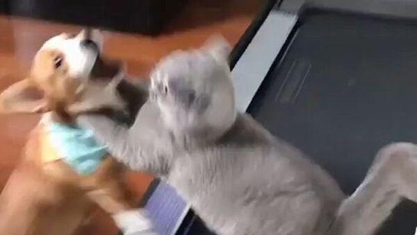 Did you eat my treats? - Sputnik International