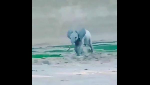 Baby elephant - Sputnik International