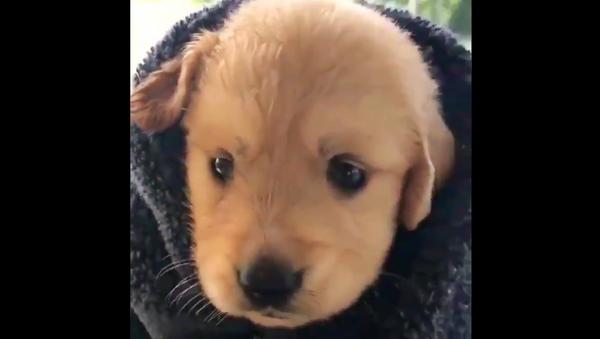 Puppy - Sputnik International