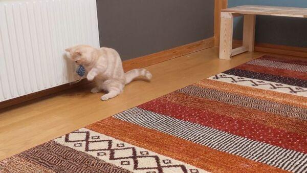 Cat is puzzled - Sputnik International