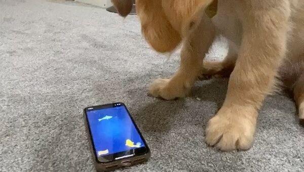 puppy and smartphone - Sputnik International