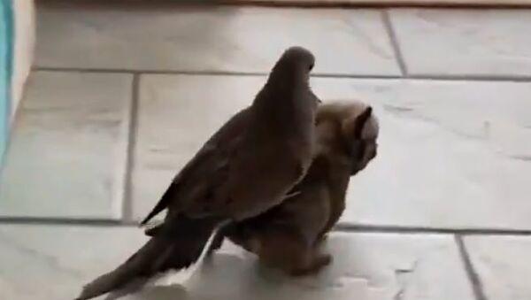 Dog and pigeon - Sputnik International