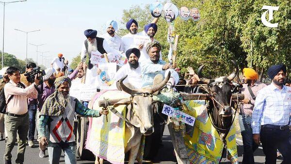 Akali MLAs ride to Punjab Assembly on bullock carts - Sputnik International