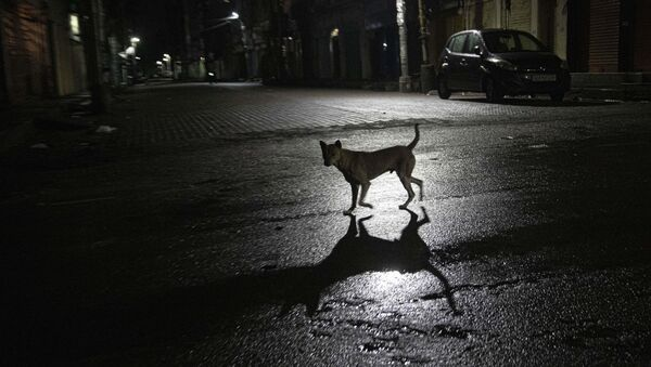 A stray dog crosses a deserted road during nationwide lockdown in Gauhati, India, Tuesday, May 5, 2020 - Sputnik International