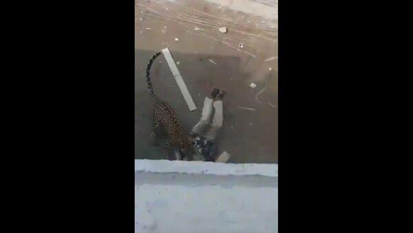 Leopard attacks  - Sputnik International