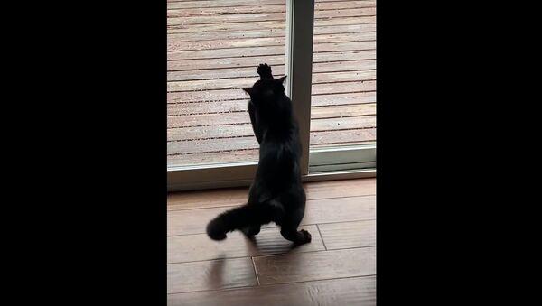 Kitten Doesn't Understand Glass Yet || ViralHog - Sputnik International
