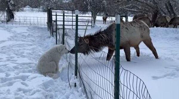 dog and elk - Sputnik International