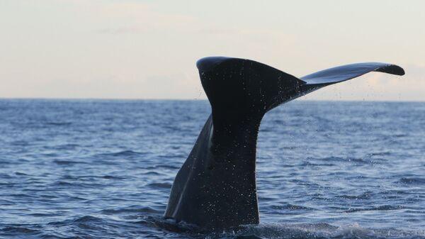Whale's Tail - Sputnik International